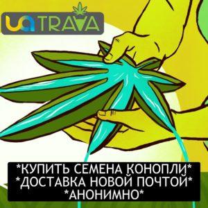 Купить семена конопли в Украине с доставкой
